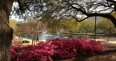 Thomas_Cooper_Library,_University_of_South_Carolina,_Reflecting_Pond_in_Spring_01